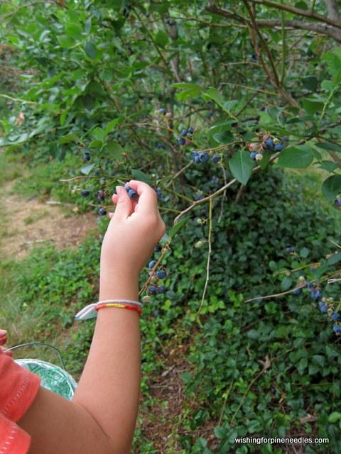 Maresberries