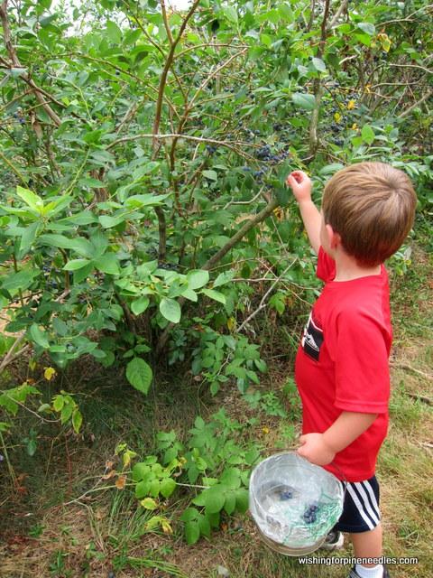 Hansberries